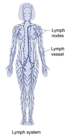 Outline of human figure showing lymph vessels and lymph nodes throughout body.